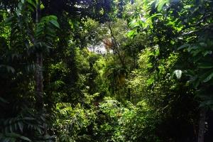 Avaana-Rear View
